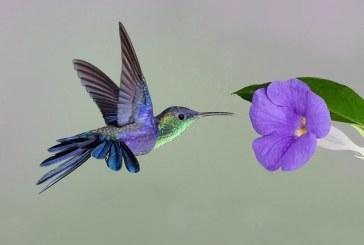 Yogananda – Il colibrì alla ricerca di Dio