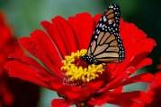Yogananda – Cambiare se stessi per vivere meglio
