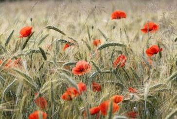 L'estate in poesia di Hermann Hesse, Emily Dickinson, Pablo Neruda